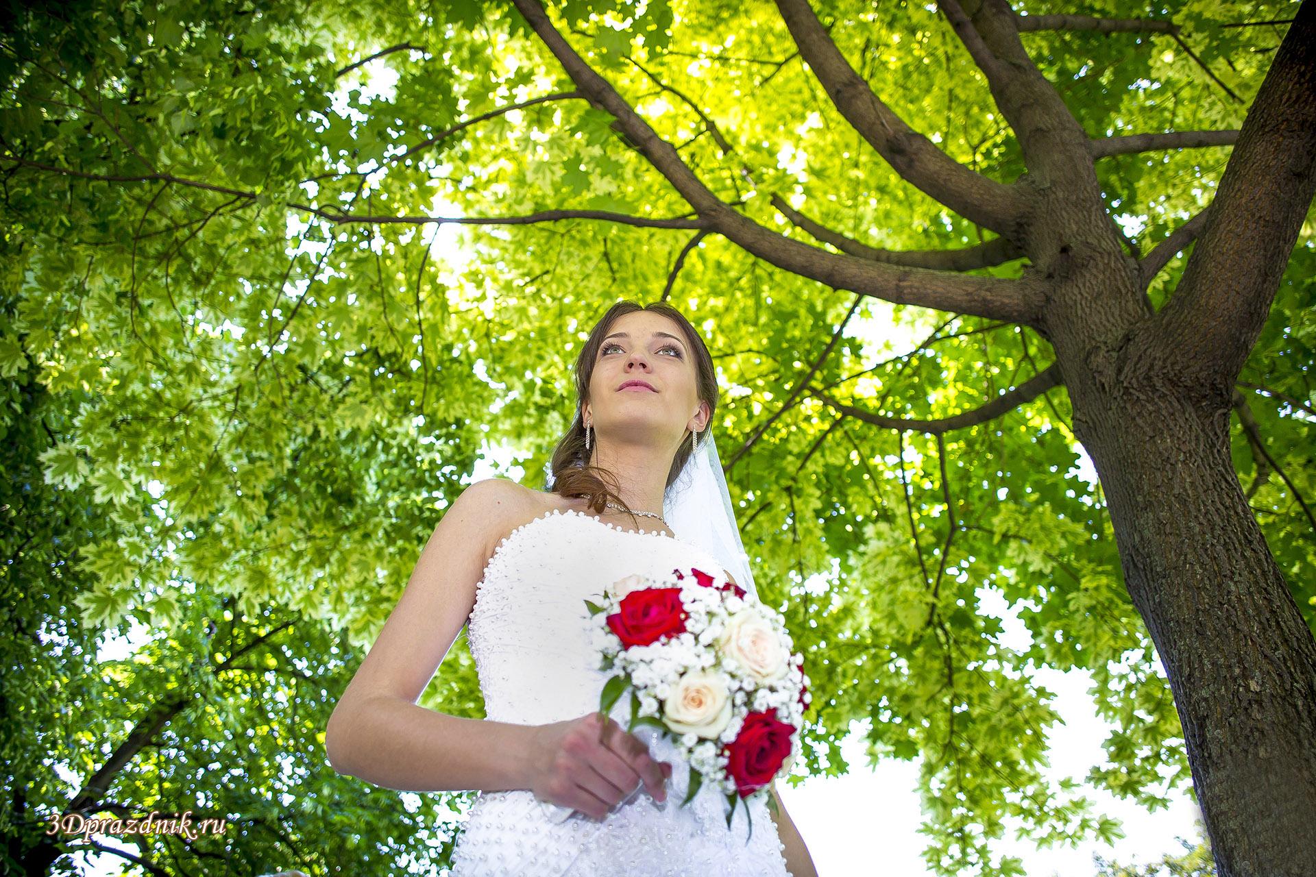 Невеста Ольга. Солнечный клен