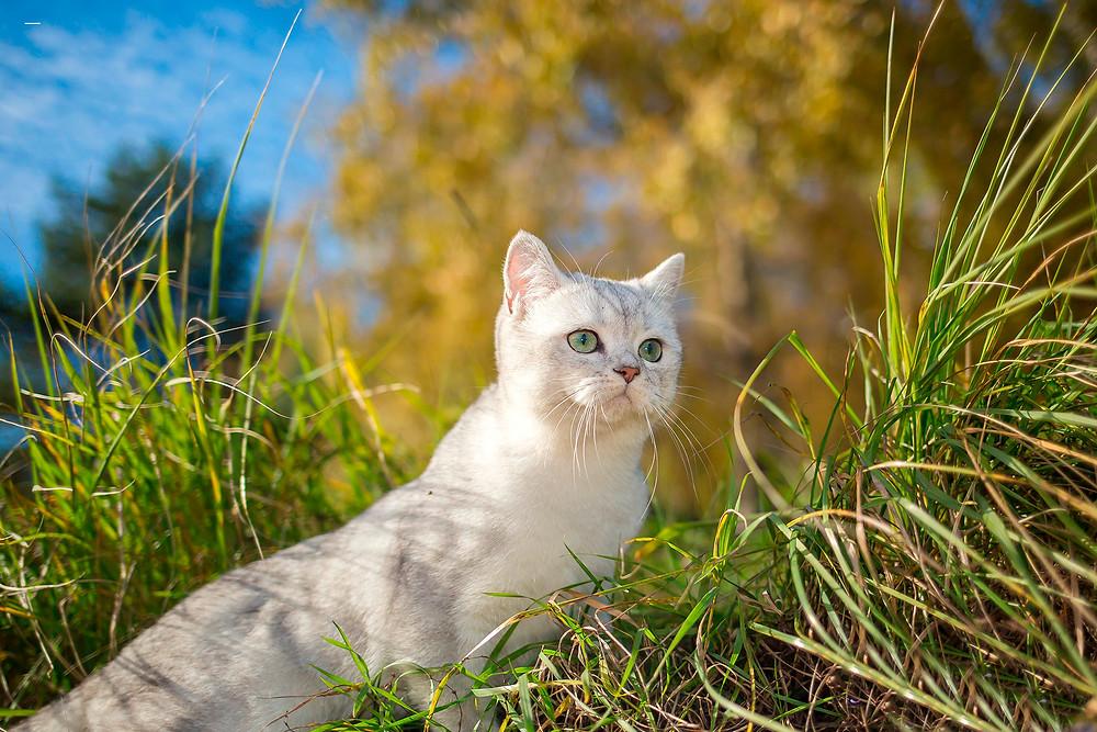 Профессиональная фотография кота.jpg