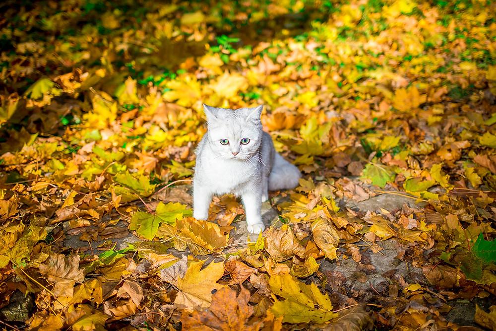 Кот и осенняя листва.jpg