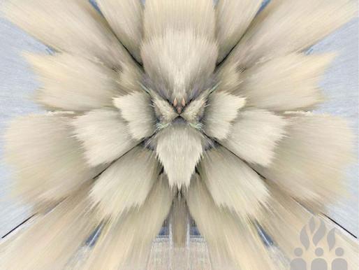 Sal - Untitled Touch / Beskar - Commercial Suicide / Suicide110