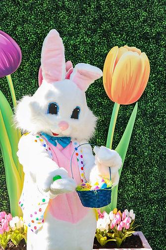 bunny_READY-9266.jpg
