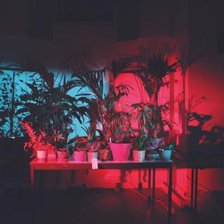 ALEXANDRA DUVEKOT & THE PLANT ORCHESTRA