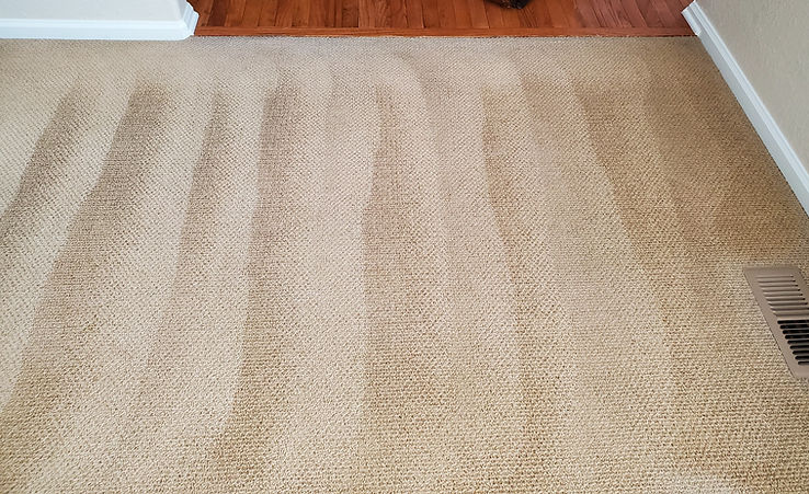 After Carpet Cleaning Photo by King Orga