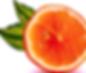 new orange logo by king organic.png