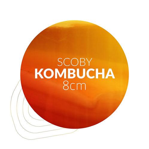 SCOBY Kombucha (8 cm)