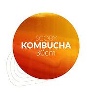 SCOBY Kombucha (30 cm)