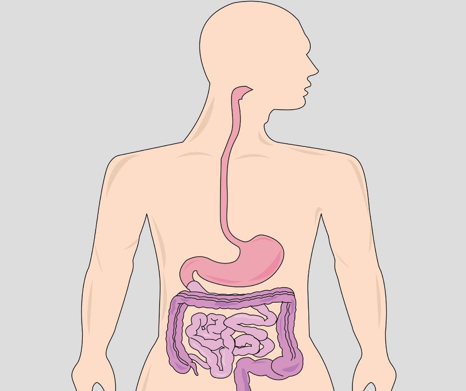 gastrointestinal health nutrition healthworks