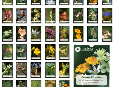 Módulo 7 - Lectura de Cartas Florales