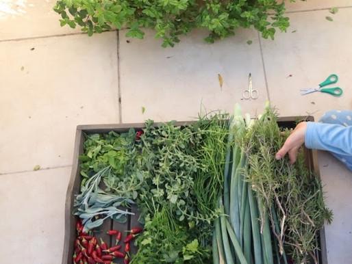 גינת ירק בעיר