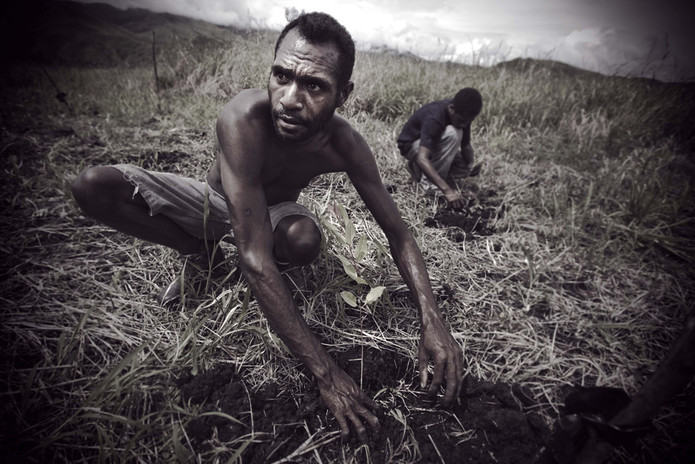 Teak Farming Photo by Paul Jones for ACIAR, Partners magazine