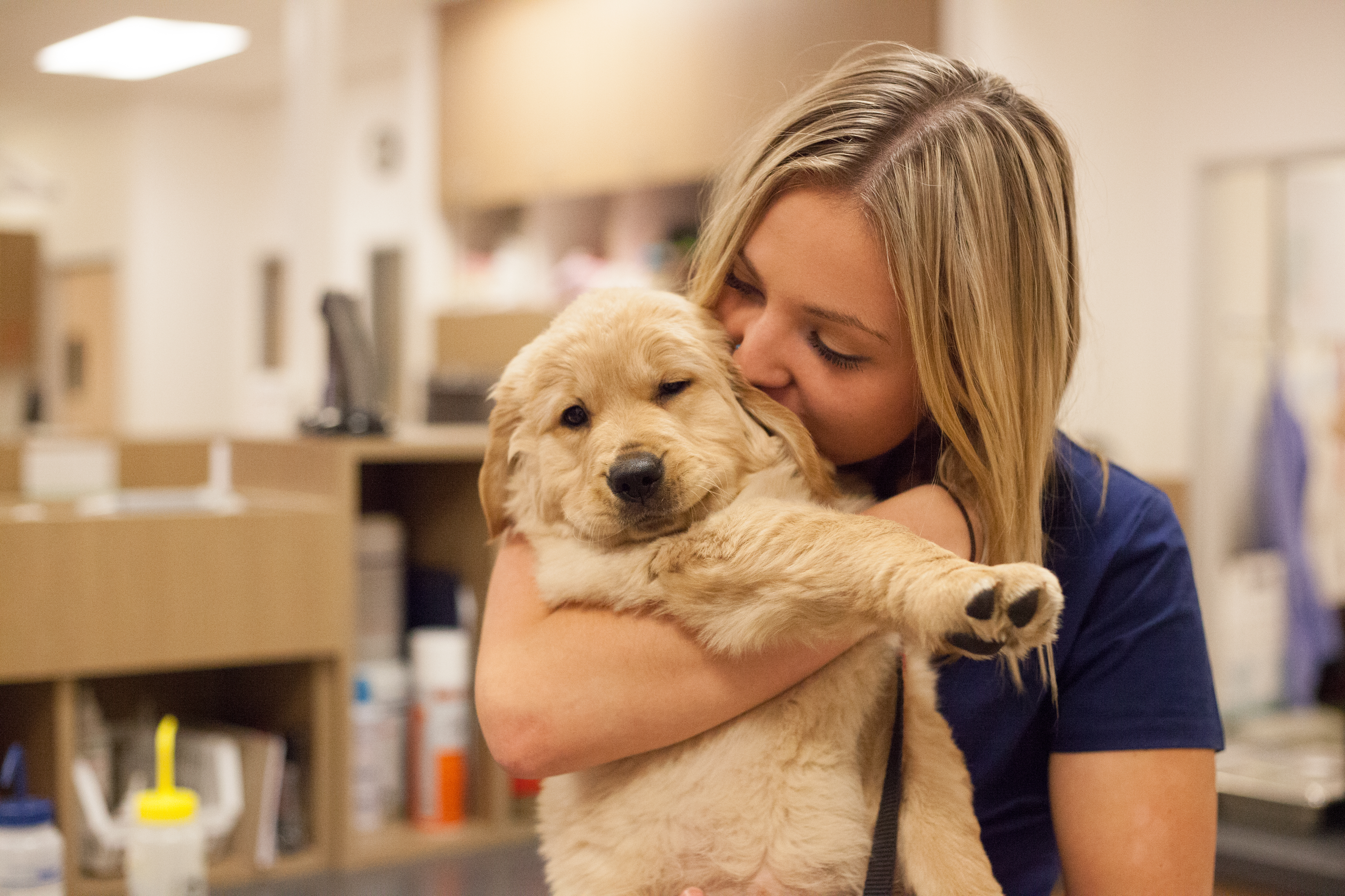 Four Corners Veterinary Hospital