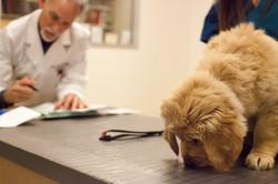 Four Corners Veterinary Hospital