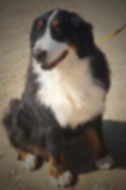 Adult dog #1 (Small).jpg