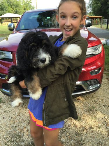 Hurricane Creek Doodles : Famous Bernedoodle & Goldendoodle Puppies