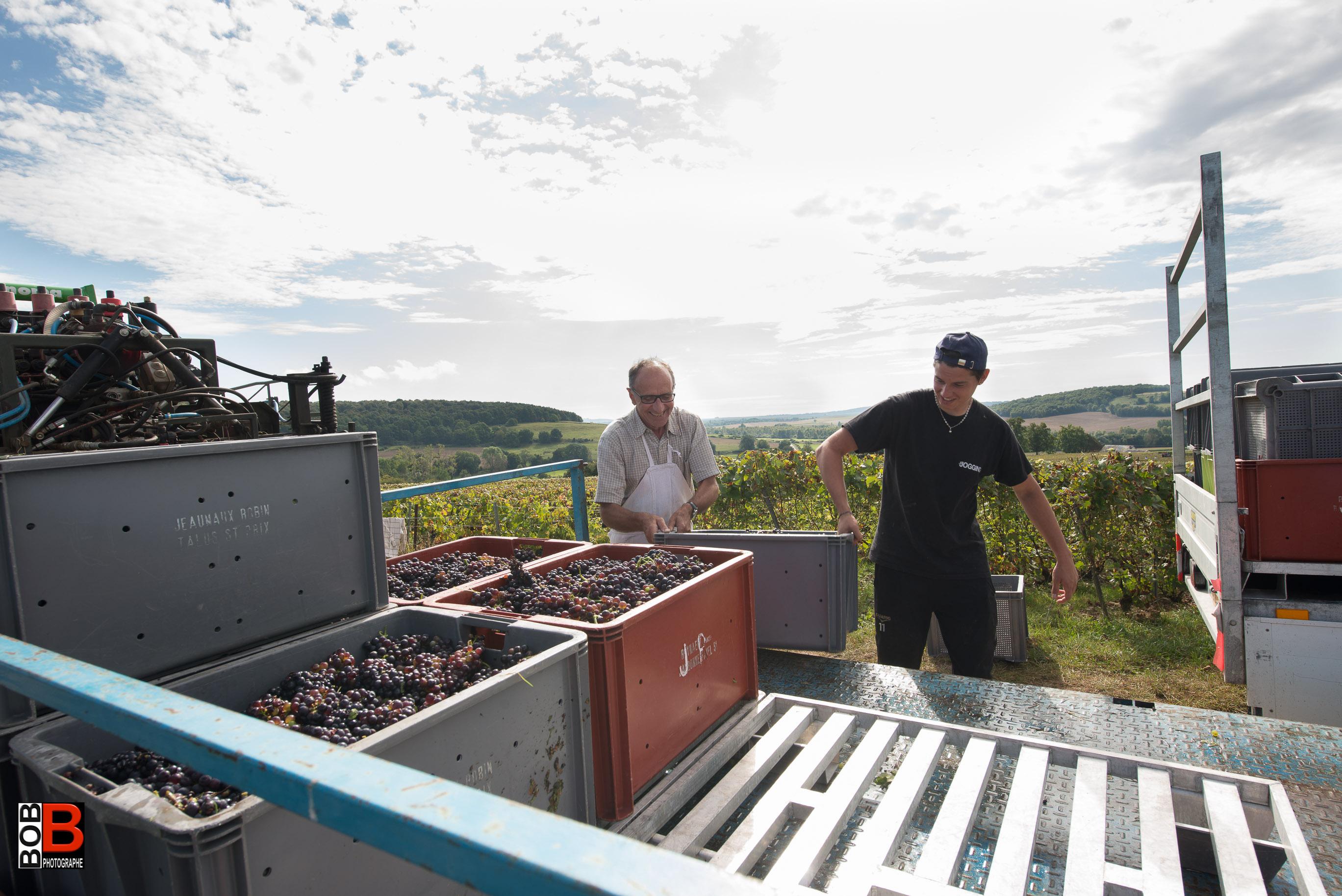 Chargement des caisses à la vigne