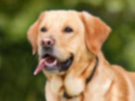 dog-1210559_640.jpg