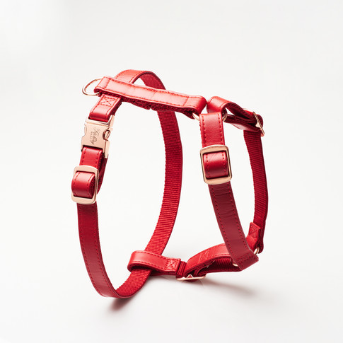 Product photography for pet wear