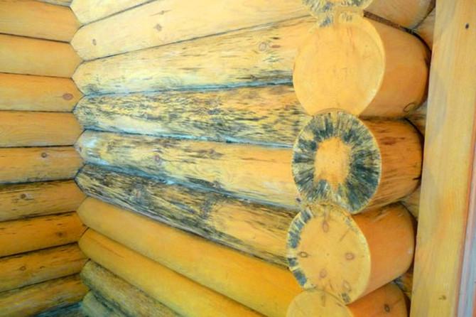 Как побороть плесень в деревянном доме?
