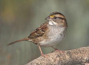 animal-avian-beak-155002 (1).jpg