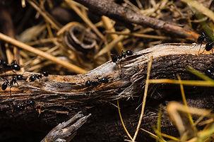 Pest and Rodent Control Kansas City