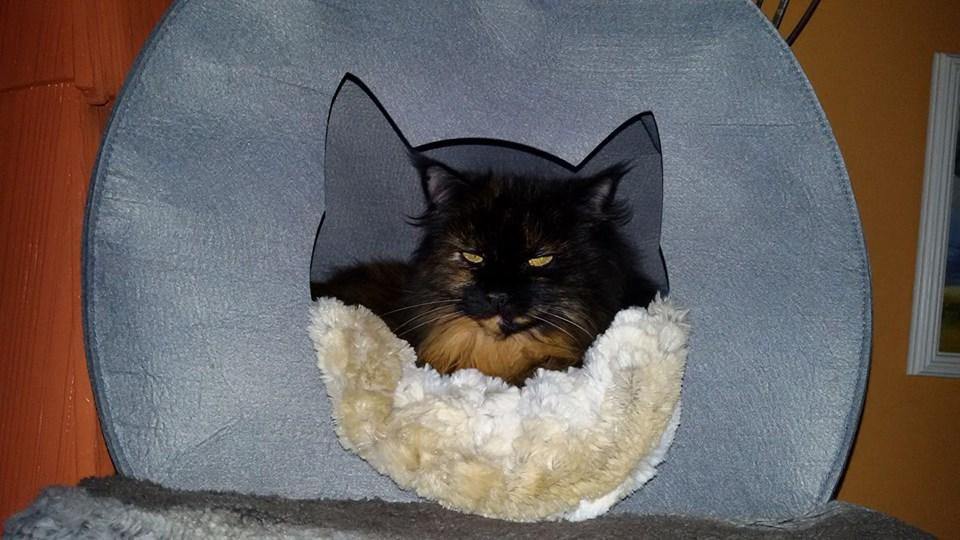 Kitty_v._Sabine_Märte