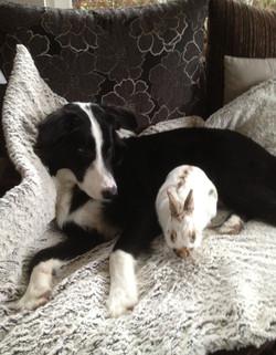 Mo + Kaninchen Lilly