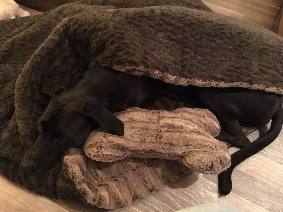Rocky_Schlafmütze
