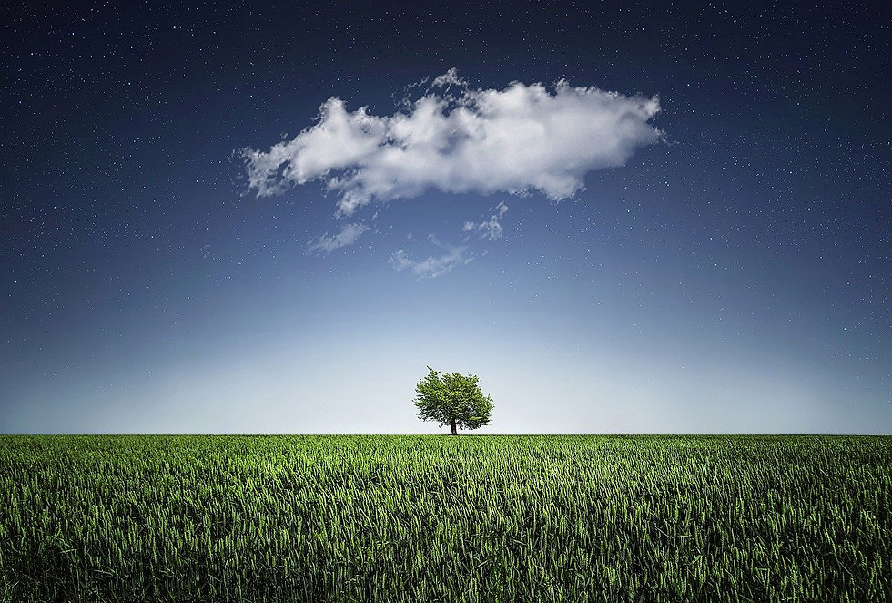 tree-736887_1280.jpg