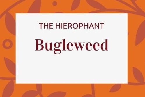 Bugleweed - Lycopus Virginicus