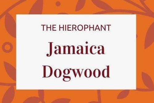 Jamaica Dogwood - Piscidia piscipula