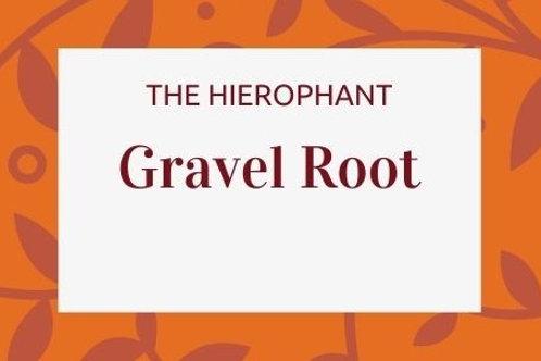 Gravel Root - Eupatorium purpureum