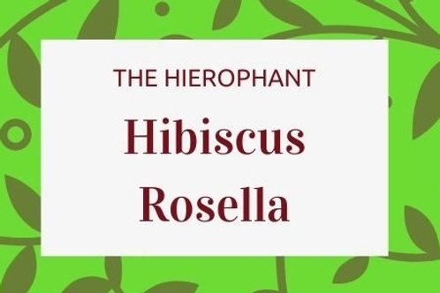 HIbiscus Rosella