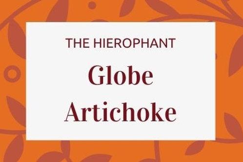 Globe Artichoke - Cynara cardunculus