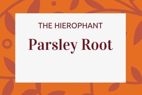 Parsley Root - Petroselinum crispum