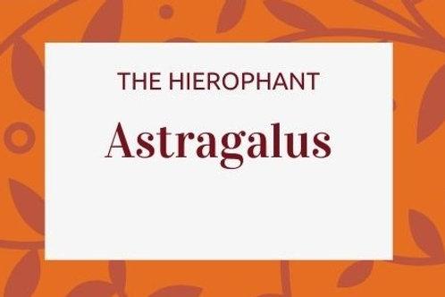 Astragalus - Astragalus membranaceous
