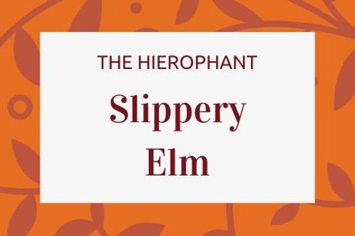 Slippery Elm - Ulmus rubra