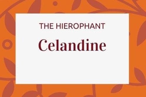 Celandine - Chelidonium majus