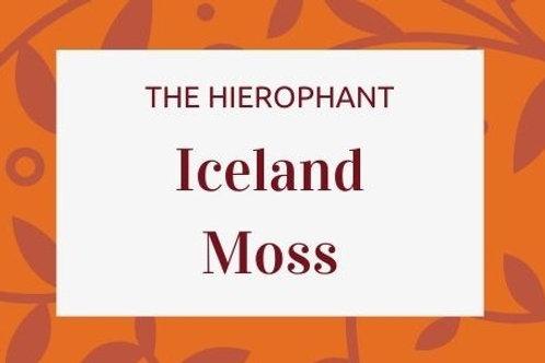 Iceland Moss - Cetraria islandica