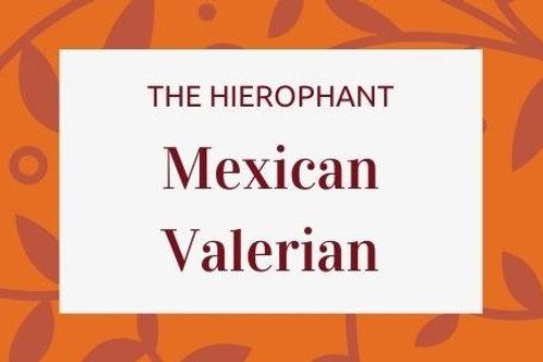 Mexican Valerian - Valeriana edulis