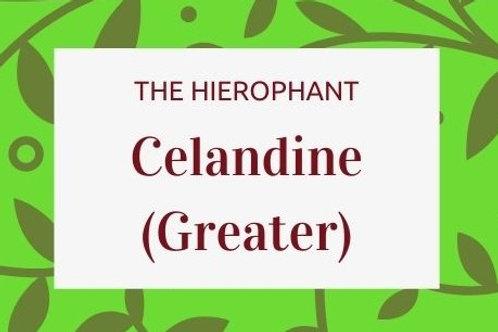 Celandine (Greater)