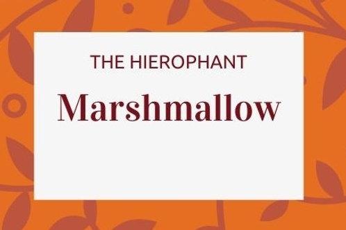 Marshmallow - Althaea officinalis