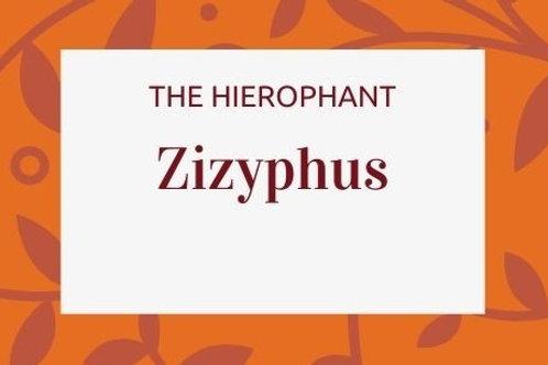 Zizyphus Jujuba