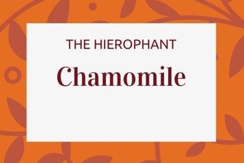 Chamomile - Matricaria chamomilla