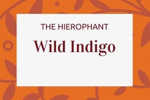 Wild Indigo - Baptisia australis