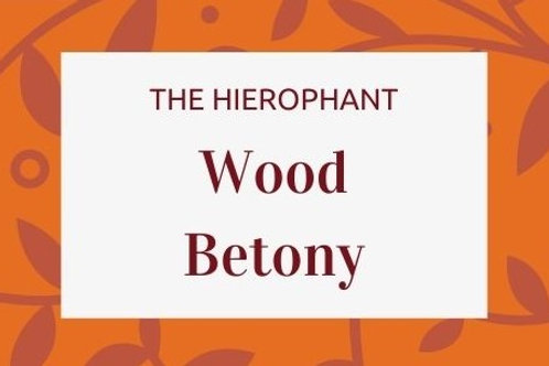 Wood Betony - Betonica officinalis