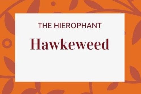 Hawkeweed - Hieracium