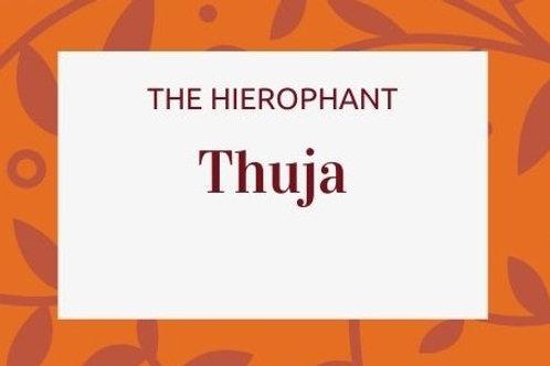 Thuja -Thuja occidentalis