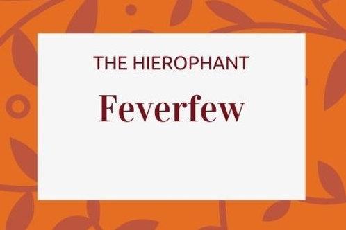 Feverfew - Tanacetum parthenium