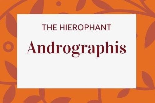 Andrographis - Andrographis paniculata