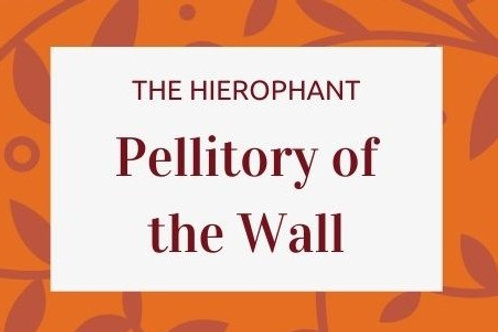 Pellitory of the Wall - Parietaria judaica